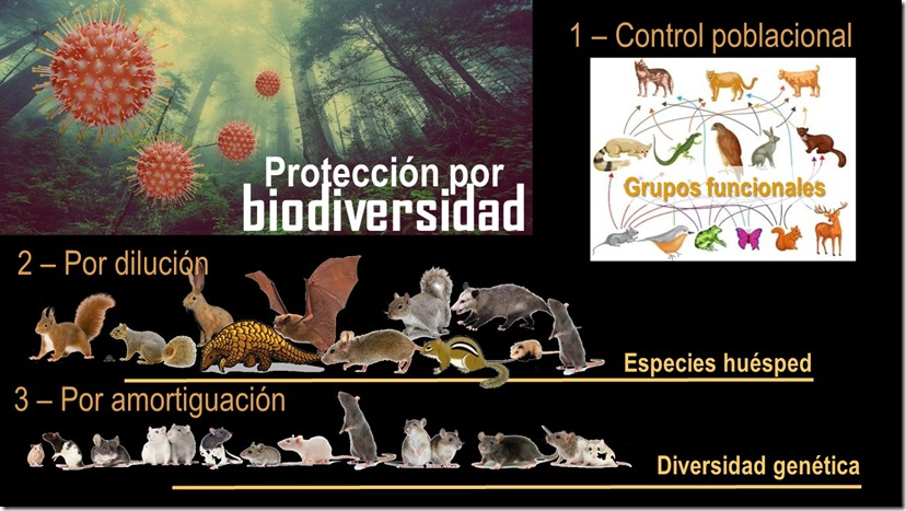 mecanismos proteccion
