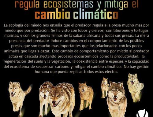 La presencia de predadores regula ecosistemas y mitiga el cambio climático
