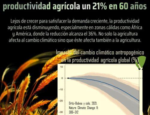 El cambio climático reduce la producción agrícola un 21% en 60 años